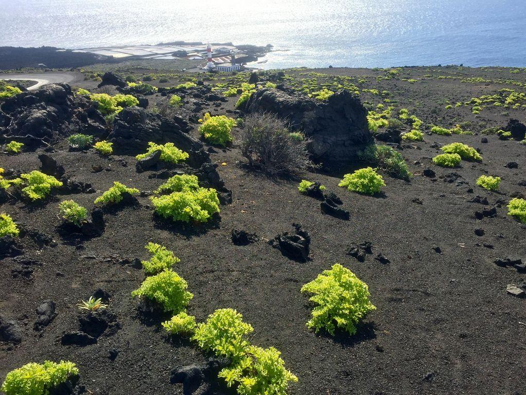 Wanderreise La Palma