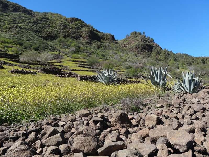 Natur Gran Canaria