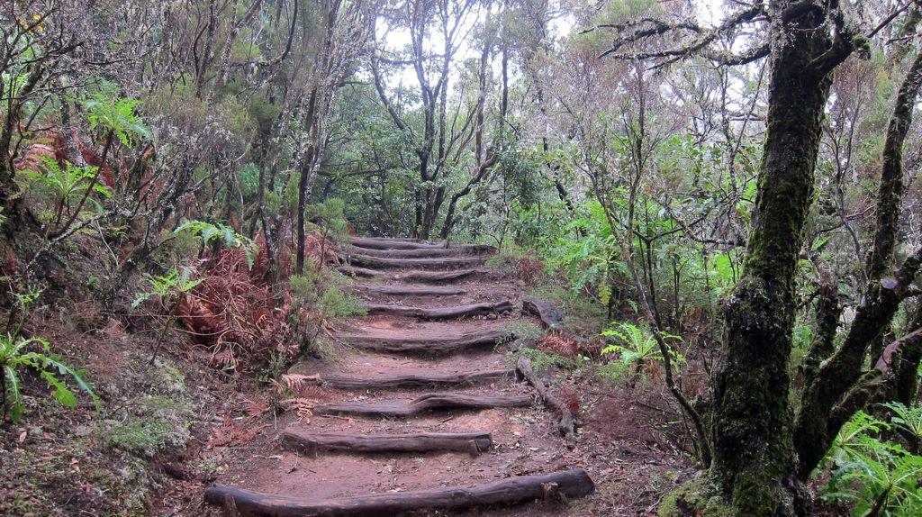 Wanderweg durch den Nebelwald La Gomeras
