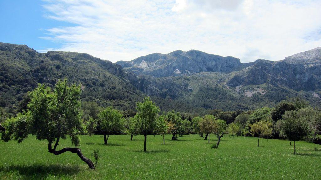 Blick auf die Tramuntana Berge
