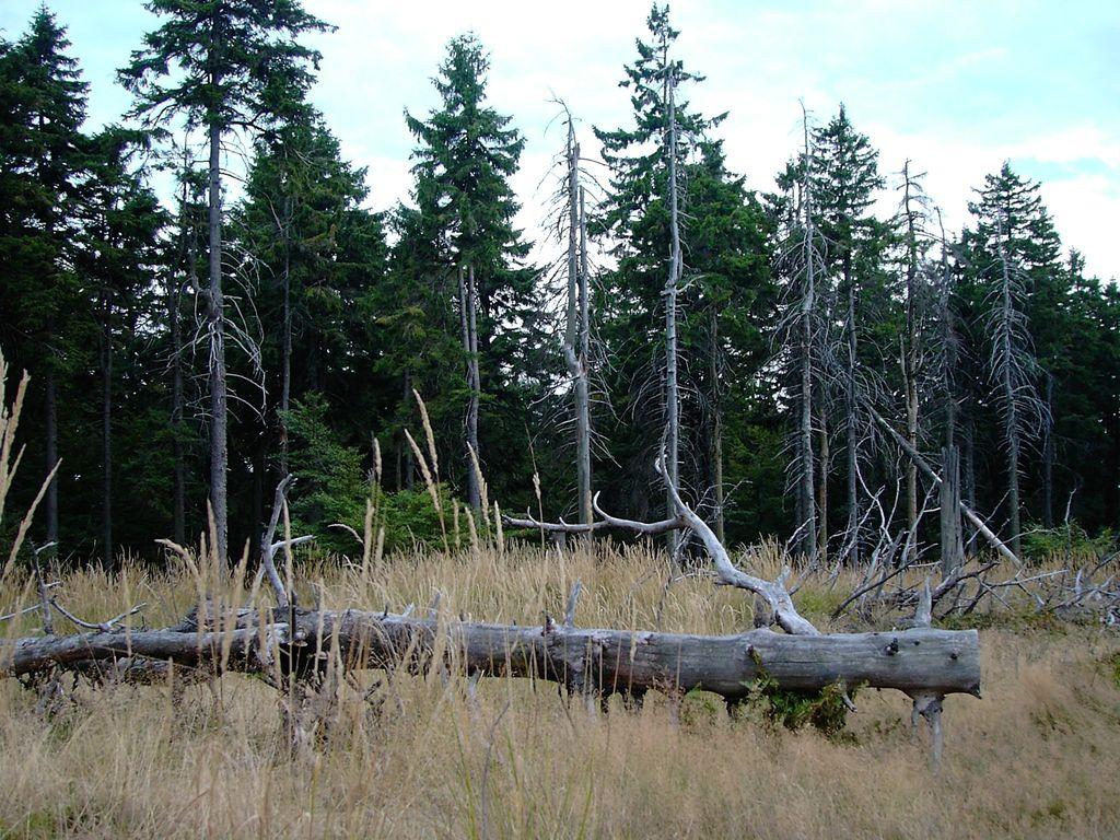 Stromy v Durínskom lese